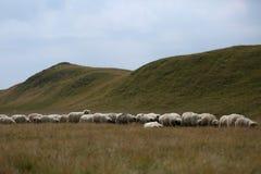 Sheep on mountain peaks, full portrait Stock Photo