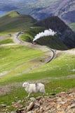 Sheep and mountain railway. From the Llanberis Pass, Mount Snowdon, Snowdonia, Wales UK Stock Photo