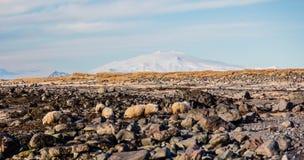 Sheep mountain Stock Photo
