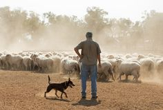 Sheep mustering in outback New South Wales. Australia stock image