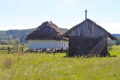 Sheep near old barn Royalty Free Stock Image