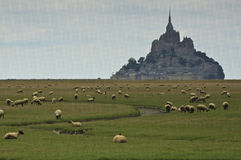 Sheep nearby Mont Saint Michel Stock Image