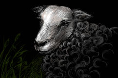 Sheep at night Stock Photo