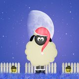 Sheep with nightcap Stock Photo