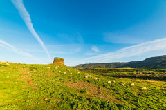 Sheep by Nuraghe Paddaggiu Leni. Between Castelsardo and Valledoria, Sardinia royalty free stock image