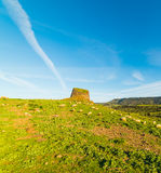 Sheep by a Nuraghe. In Sardinia royalty free stock photos