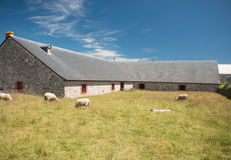 Sheep and old stone barn Royalty Free Stock Images