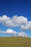 Sheep On A Hillside Royalty Free Stock Photo