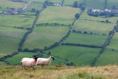 Free Sheep On The Hills Stock Photography - 6455092