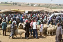 Sheep open-air market in Morocco stock image