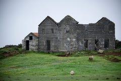 Sheep outside stone farmhouse, Iceland Stock Photos