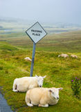 Sheep passing place Royalty Free Stock Photos