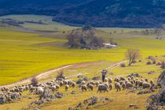 Sheep pastor descending from the mountain Stock Image