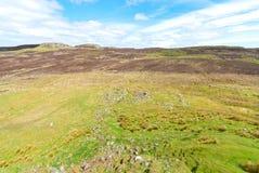 Sheep pasture Royalty Free Stock Photo