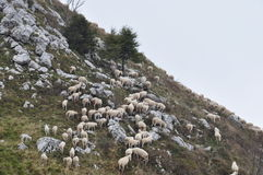 Sheep pasturing on a slope of a mountain Royalty Free Stock Photography