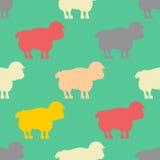 Sheep pattern. ewe ornament. Flock of sheeps. Farm animal backgr Stock Photo