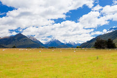 Sheep, peaks and Mt Aspiring NP, Southern Alps NZ Royalty Free Stock Photos