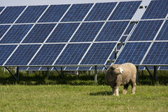 Sheep and photovoltaic panel Royalty Free Stock Photography