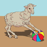 Sheep playing the ball Stock Image