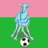 Sheep playing football Stock Photos