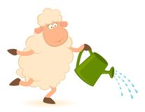 Sheep pours from a watering-can Royalty Free Stock Images
