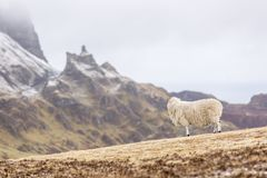 Sheep on the Quiraing stock photography