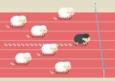 Sheep race Royalty Free Stock Photo