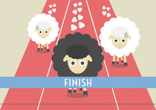 Sheep race Stock Image