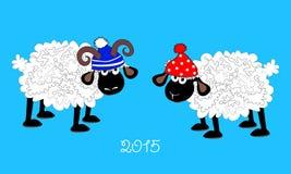 Sheep and ram Stock Image