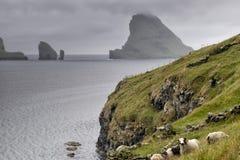 Sheep ram in far faer oer island landscape Royalty Free Stock Photos