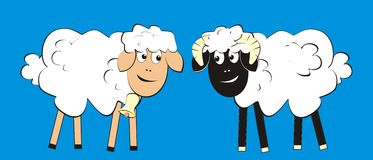 Sheep and ram Stock Photography