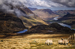 Sheep Rambling, The Lake District. A landscape shot looking down over the Lake District Stock Photography