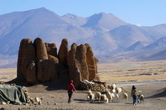 Sheep with relics and Mountains in Tibet Stock Images