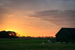 Sheep are resting near a barn in the dutch countryside under a beautiful evening sky. royalty free stock photo