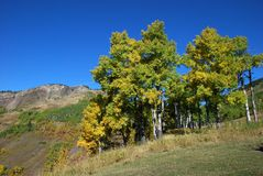 Sheep River Valley in Autumn Stock Image
