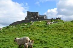 Sheep Roaming at the Rock of Cashel Royalty Free Stock Photo