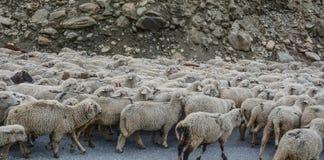 Sheep running on mountain stock image