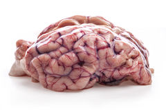 The sheep's brain. On white background stock image