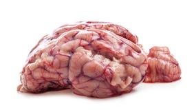 Sheep`s brain isolated on white. Background stock image