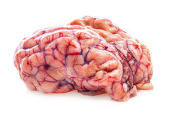 The sheep's brain. On white background Stock Images