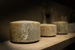 Sheep's cheese Royalty Free Stock Photo
