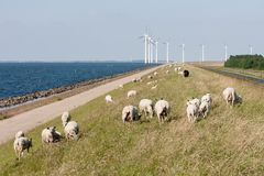 Sheep , sea and windturbines in the Netherlands Royalty Free Stock Photo