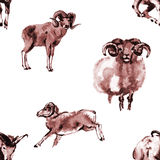 Sheep seamless background Stock Images