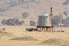 Sheep in shade of water tank Stock Photography