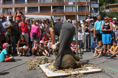 Sheep Shearing. The association Passe-Partout organizes the most ancient Fete du Bois (Festival of wood), with its lumberjacks' competition and its demonstration Stock Photo