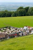 Sheep Shearing Broadway Cotswolds Countryside Royalty Free Stock Photo