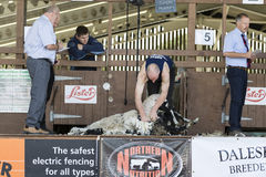 Sheep shearing competition Royalty Free Stock Image