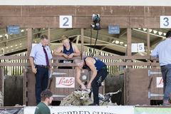 Sheep shearing competition Stock Images