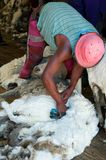 Sheep Shearing Lesotho. People at work, shearing sheep in Lesotho Stock Photo