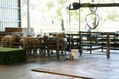 Sheep Shearing Plant Stock Images